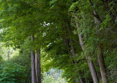 Bask in nature at Cedar Springs